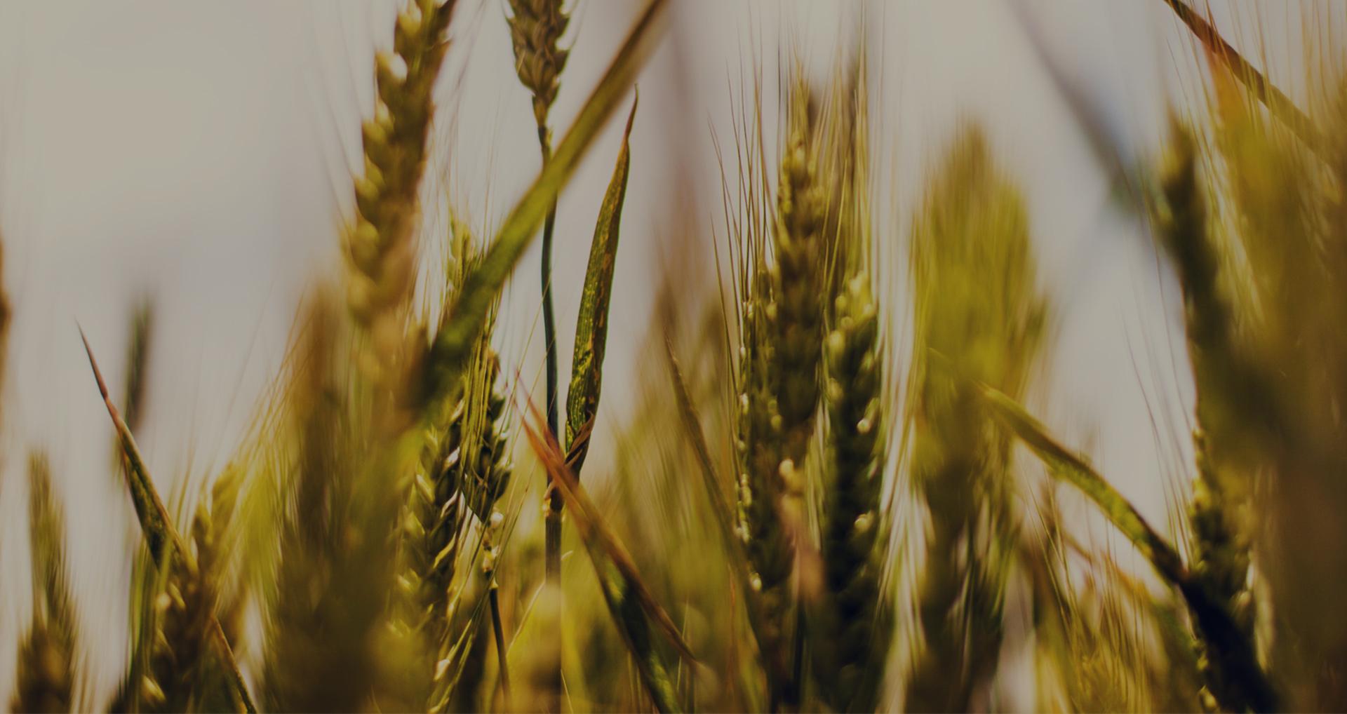 Cambio climático amenaza la base de la seguridad alimentaria de América Latina y el Caribe: el sector agrícola