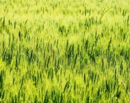 fondoverde