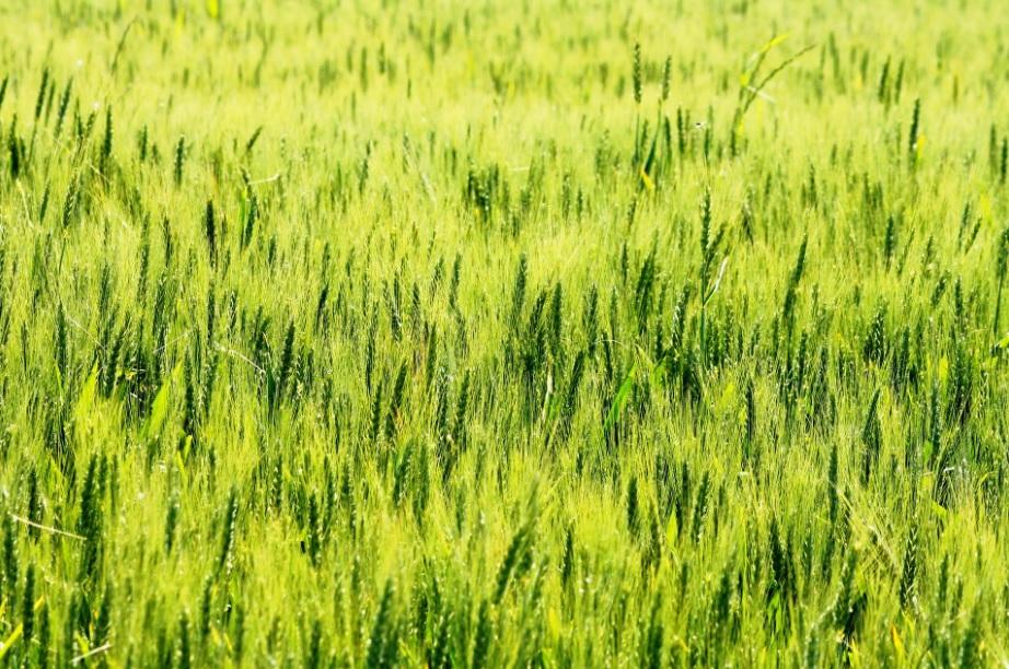 Proyecto SOBA.FARM
