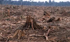 Revenues in jeopardy as companies reliant on commodities linked to deforestation underestimate risk