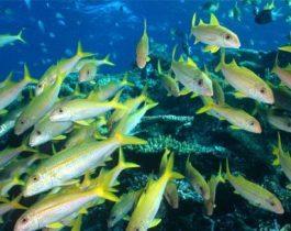 soc3b1ar-con-peces-5
