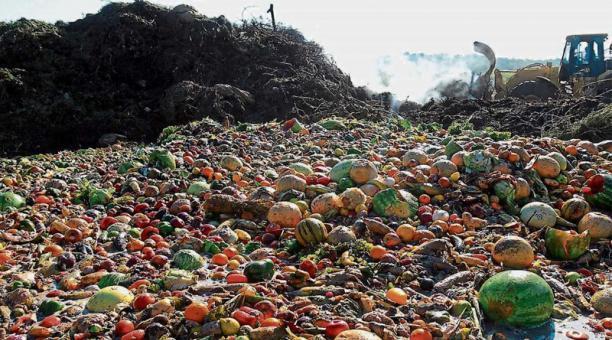 Desperdicio de alimentos: a nivel mundial, el 40% de los alimentos nunca son consumidos y terminan en la basura cada año